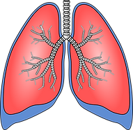 lungs-154282_960_720.png