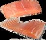 fish-2631412_960_720.png