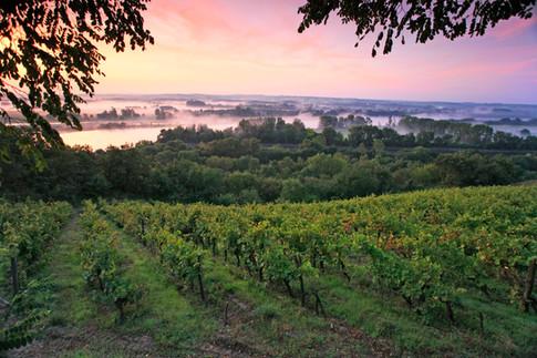 Avec 32 Appellations d'Origine Contrôlée, le vignoble d'Anjou et de Saumur offre la palette la plus diversifiée du vignoble de Loire.
