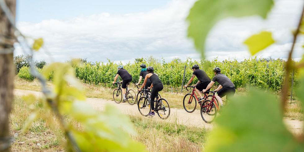Gravel tour au cœur du vignoble « Nature is Bike Experience »