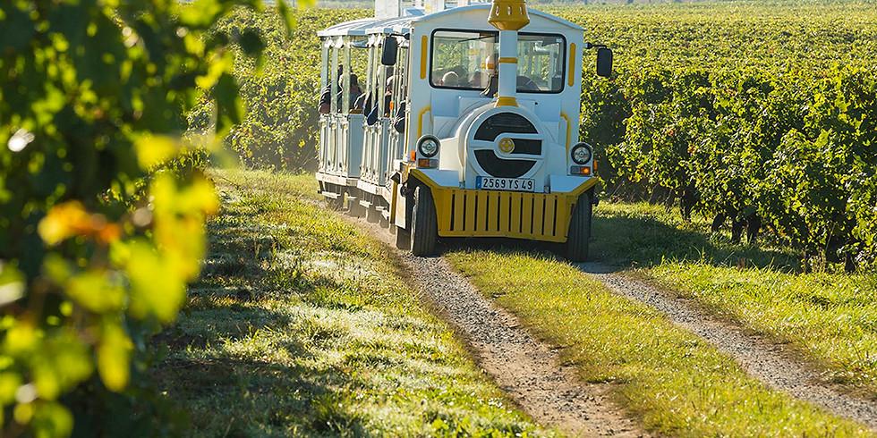 Balade gourmande en petit train dans les vignes