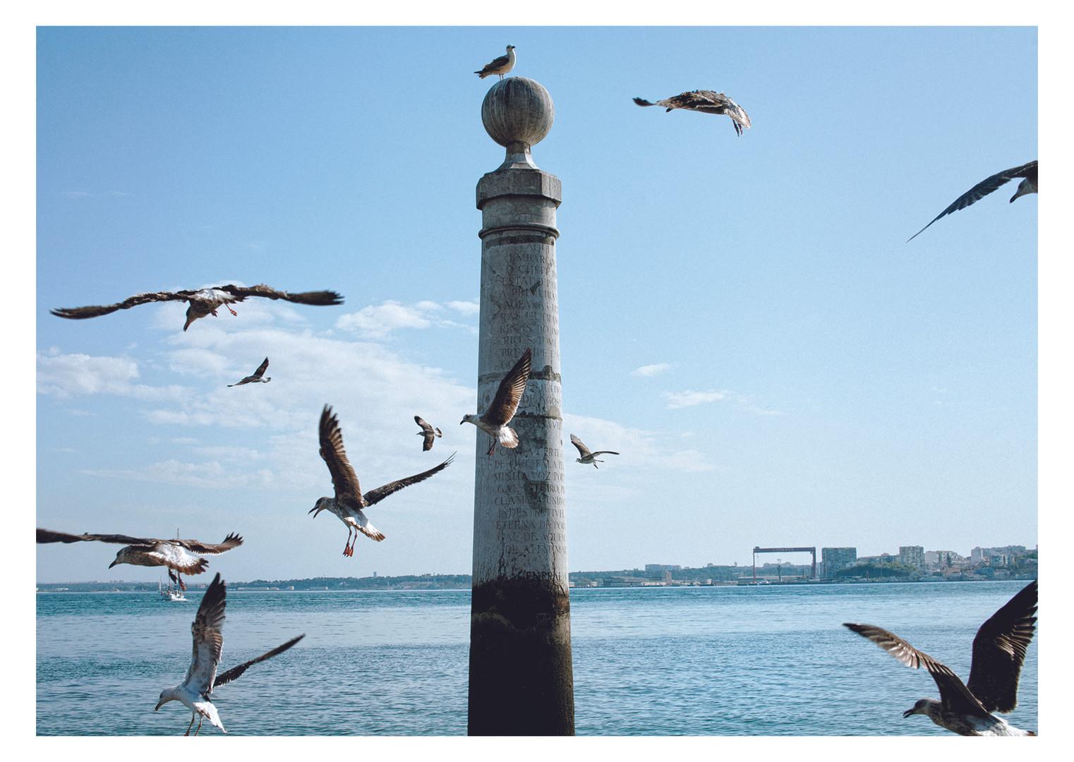 Seagulls Beth Steddon photography Brighton.jpg