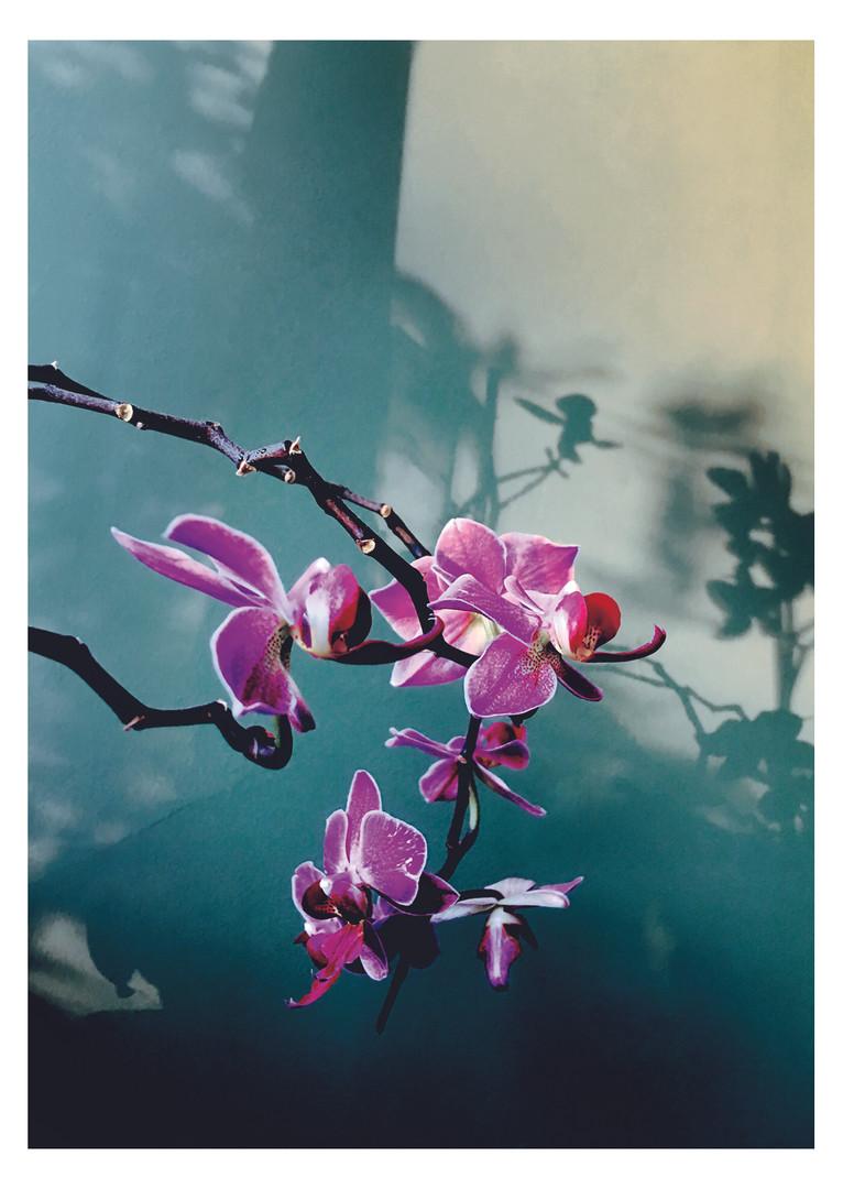orchid still life photography by Brighton Photographer Beth steddon.jpg
