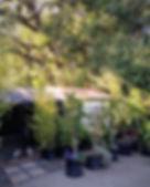 cat house two.jpg