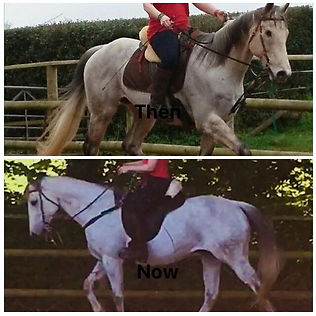 rehabilitation ex-racehorse schooling natural horsemanship training horse connection clinic Pippsway Wellington Somerset near Devon