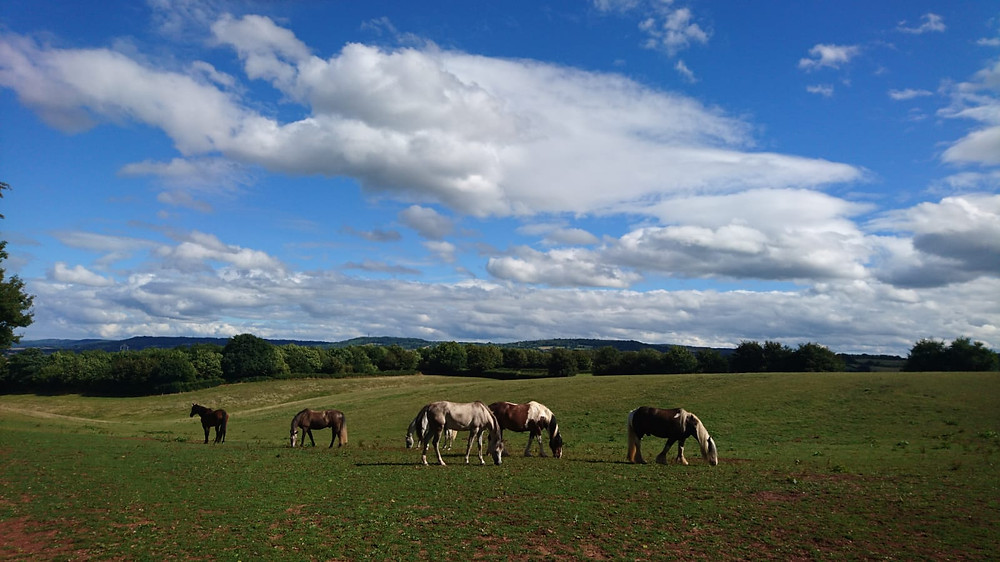 Herd of horses grazing at Pippsway Classical Natural Horsemanship Wellington Somerset near Devon