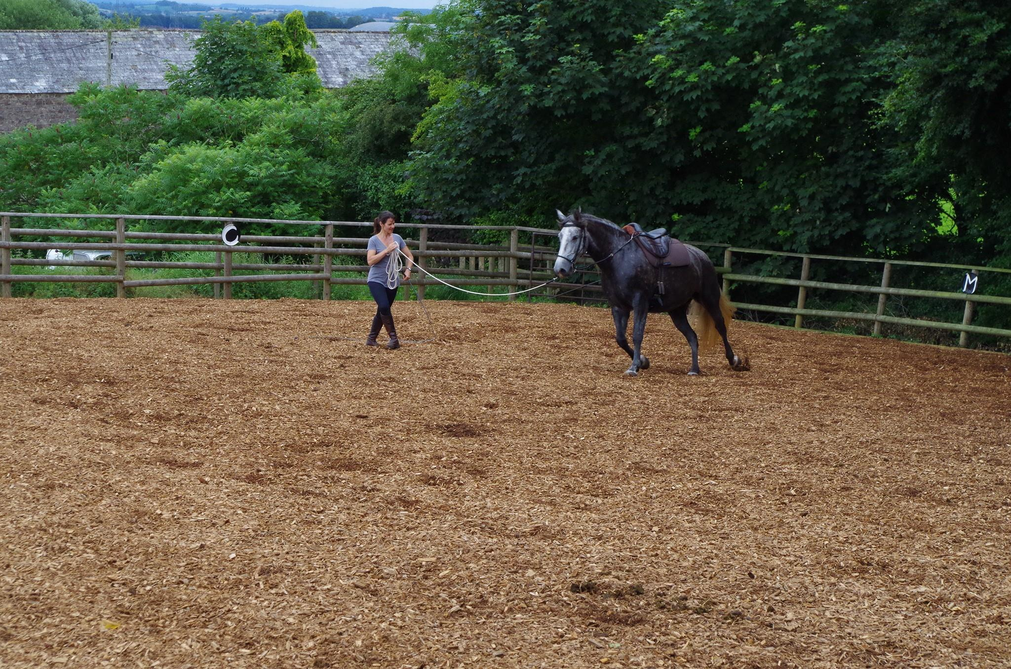 lunging natural horsemanship