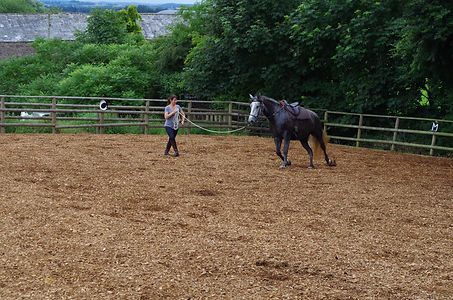 horse lunging schooling Pippsway Horse Connection Clinics Wellington Somerset