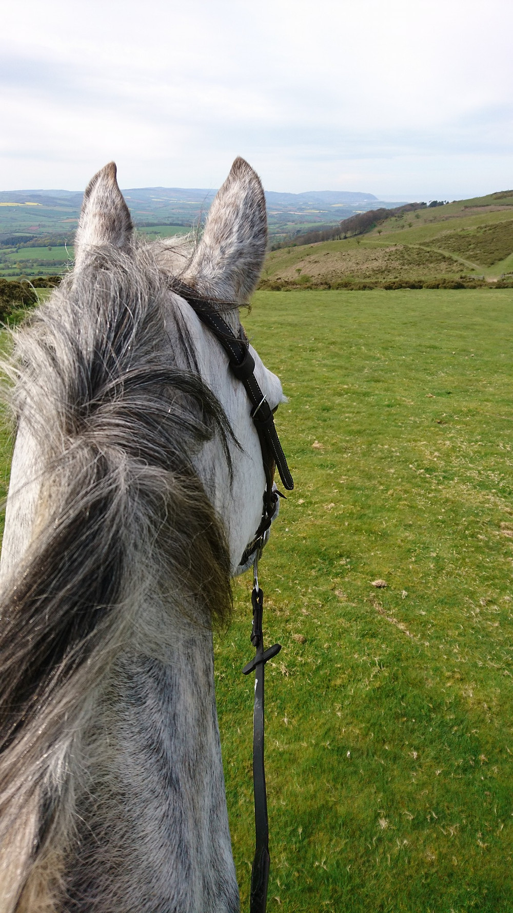 Riding on the Quantocks with Pippsway Classical Natural Horsemanship Wellington Somerset near Devon