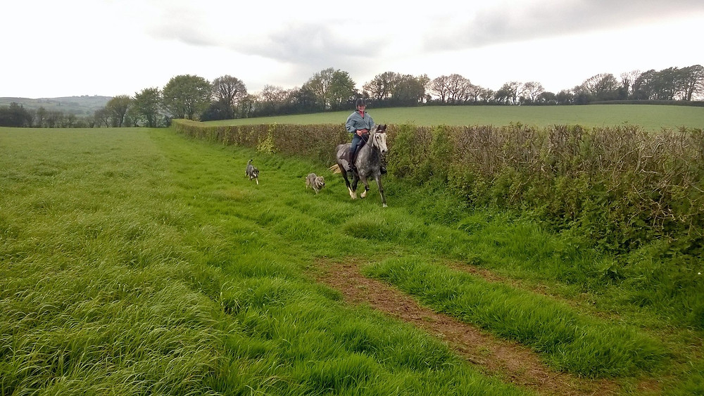 riding in the canter fields at Pippsway Classical Natural Horsemanship Wellington Somerset near Devon
