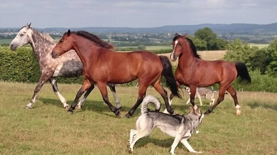 Natural Horsemanship Pippsway Wellington Somerset near Devon affinity with dogs and horses