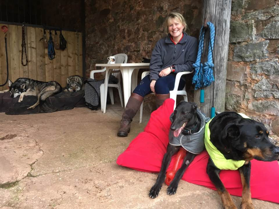 A client sat with the Pippsway dogs and her new rescue greyhound whom they have been helping to train at Pippsway Classical Natural Horsemanship Wellington Somerset near Devon