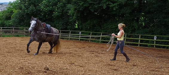 lunging schooling bringing on young horse natural horsemanship Pippsway Classical Natural Horsemansip Wellington Somerset
