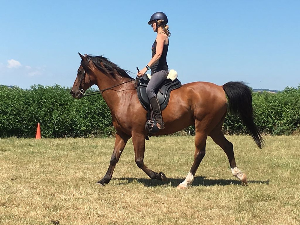 Barefoot Arab, treeless saddle, Horse Connection Clinic, Harmony, connection PIppsway Wellington Somerset near Devon