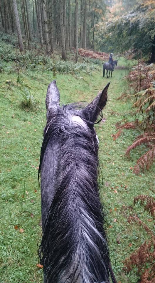 Hacking out on Exmoor Pippsway