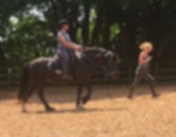 Pippsway Classical Natural Horsemanship Novice Lesson Natural Horsemanship Training schooling Wellington Somerset near Devon