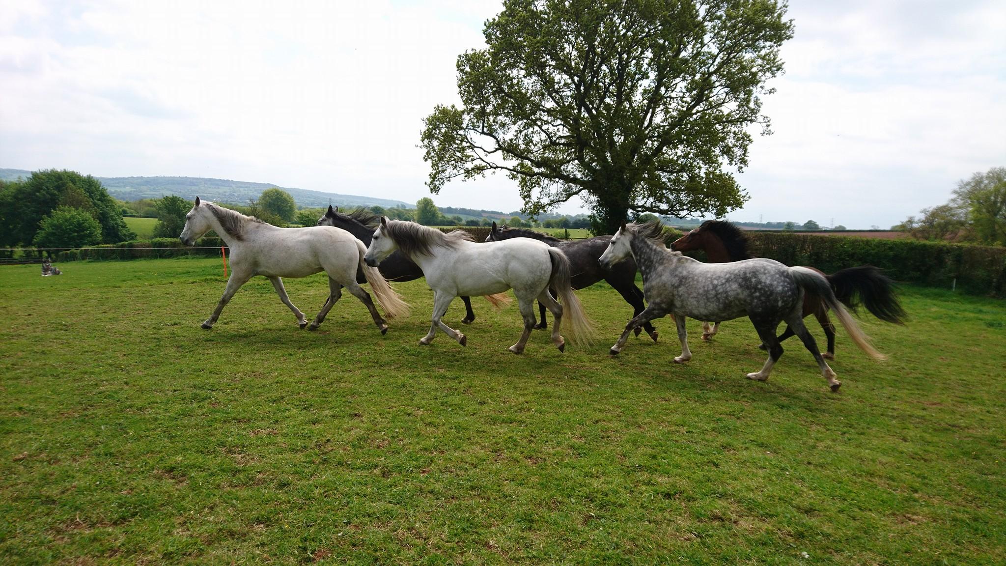 Herd free range livery Wellington