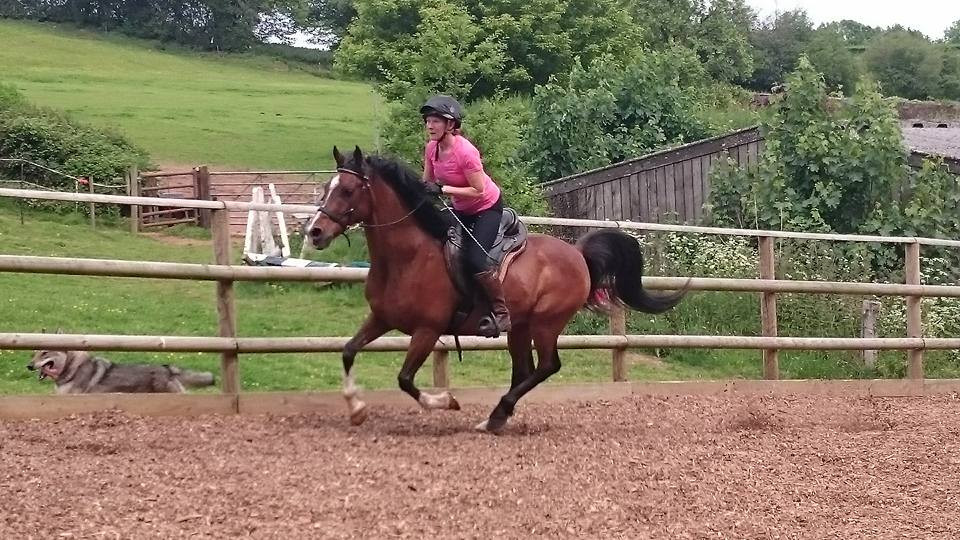 barefoot Arab, rehabilitation, schooling, training, Pippsway Wellington Somerset near Devon