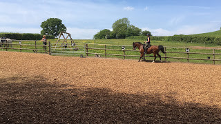 Pure bred Arab schooling at Pippsway Classical Natural Horsemanship Wellington Somerset near Devon