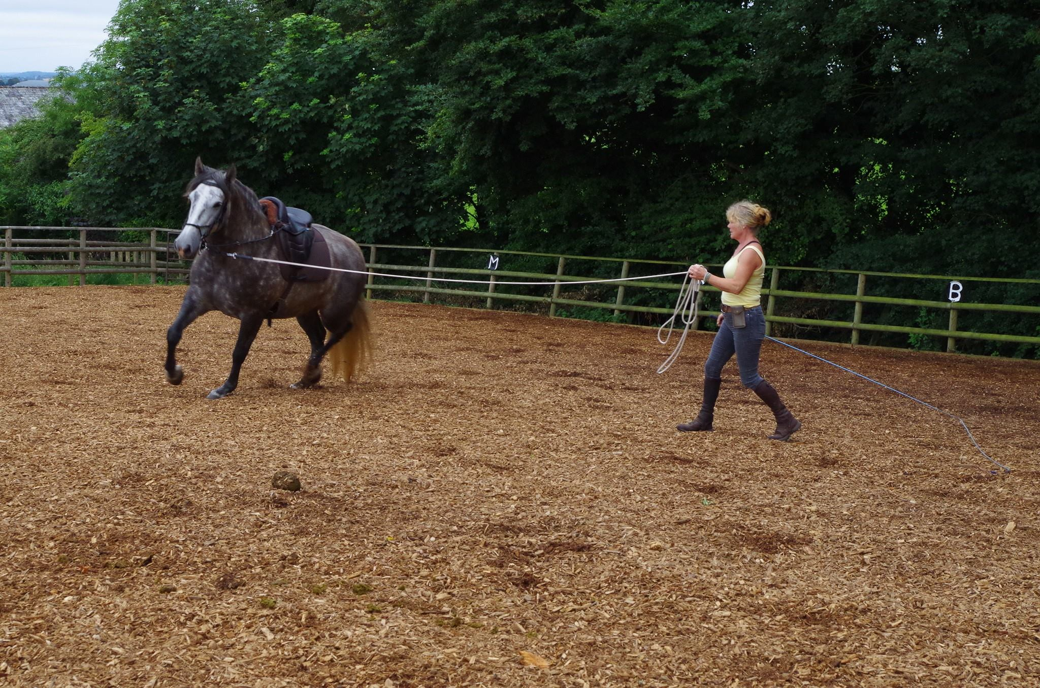 lungeing schooling young horse