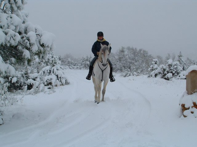 Lusitano Stallion being ridden in the snow at Pippsway Classical Natural Horsemanship Wellington Somerset near Devon