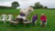 Pippsway Classical Natural Horsmanship Horse Connection Clinic Free Range grazing livery Wellington Somerset near Devon