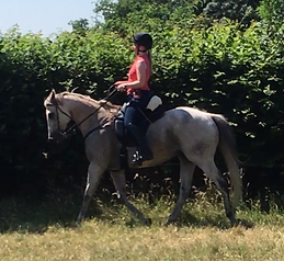 Novice rider barefoot ex-racehorse treeless saddle classical horsemanship natural horsemanship Pippsway Horse Connecton Clinic Wellington Somerset near Devon
