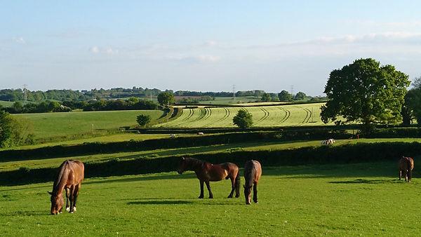 Horses grazing livery pasture acres grass herd free range Pippsway Natural Horsemanship Wellington Somerset near Devon Herd