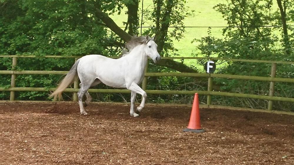freeschooling groundwork connection horsemanship