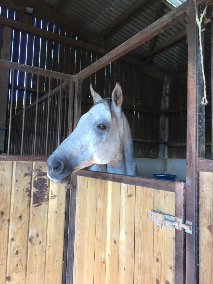 one eyed ex-racehorse at Pippsway for rehabilitation Pippsway Classical Natural Horsemanship Wellington Somerset near Devon