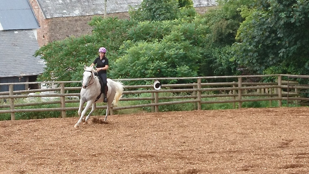Horse cantering in the menage at Pippsway Classical Natural Horsemanship Wellington Somerset near Devon