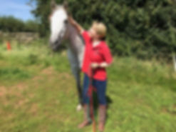 horse groundwork natural horsemanship livery grazing pasture Pippsway Natural Classical Horsemanship Wellington Somerset
