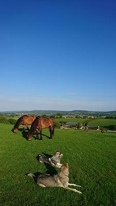 grazing pasture livery holiday dog training Pippsway Natural Horsemanship Wellington Somerset near Devon Herd