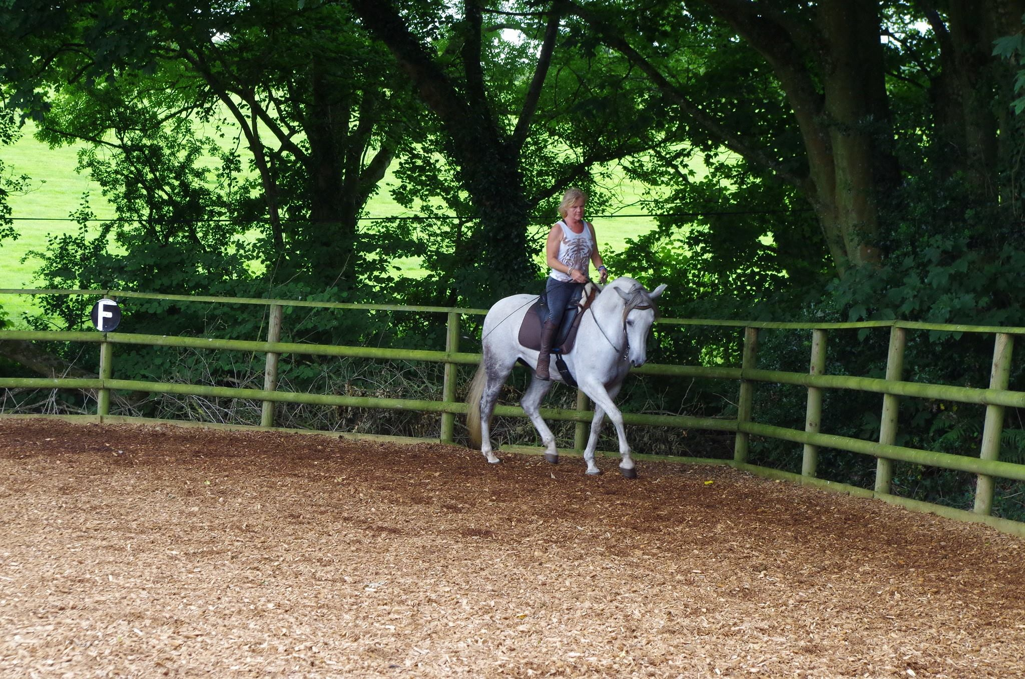 Classical Horsemanship training