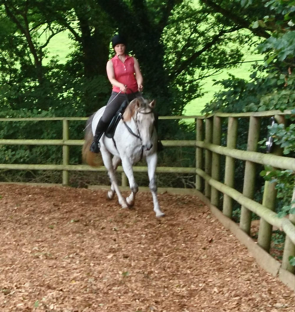 Thoroughbred schooling at Pippsway Classical Natural Horsemanship Wellington Somerset near Devon