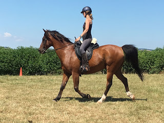 Pure bred Arab trying new treeless saddle at Pippsway Classical Natural Horsemanship
