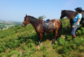 Horses hacking out on Exmoor in Somerset near Devon.