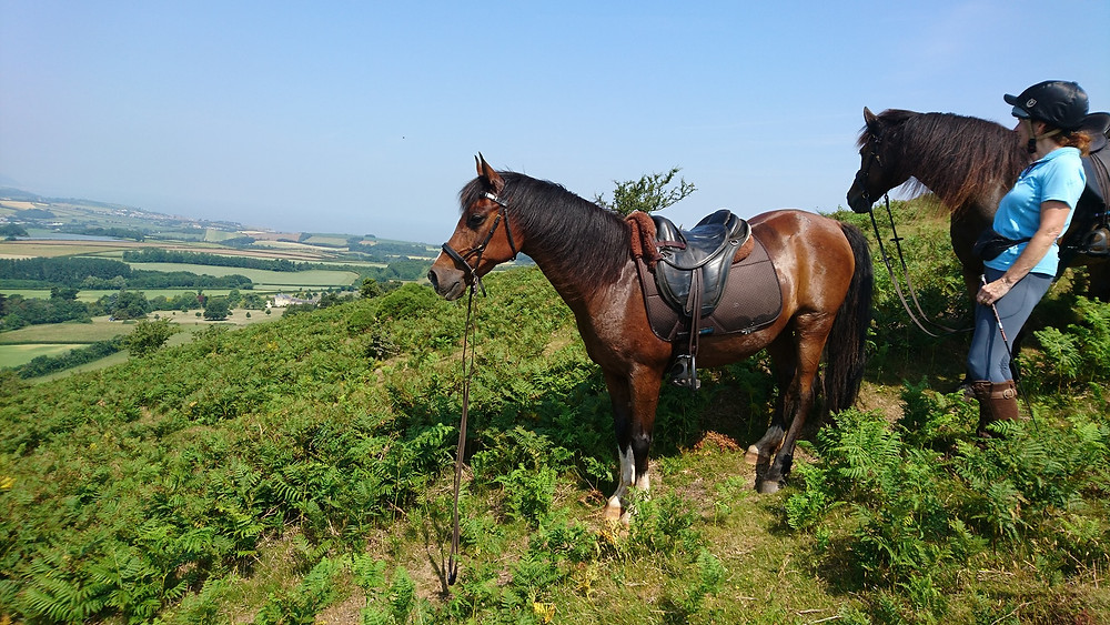 riding bitless, treeless saddle, barefoot pony on the Quantocks, Pippsway Classical Natural Horsemanship, Wellington Somerset near Devon