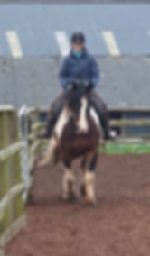 Pippsway Classical Natural Horsemanship Horse Connecton Clinic lesson training natural horsemanship in Wellington Somerset near Devon