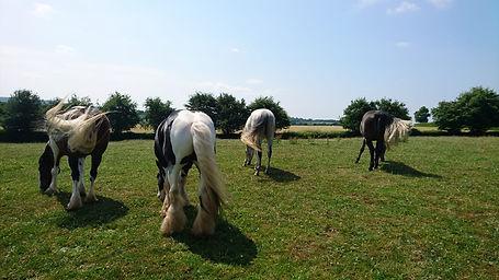Training livery rehabilitation horses grazing natural horsemanship Pippsway Horse Trainer Wellington Somerset near Devon