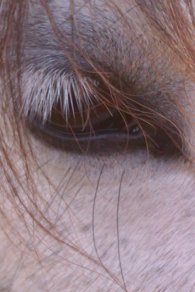 The eye of a horse Pippsway Classical Natural Horsemanship Wellington Somerset near Devon