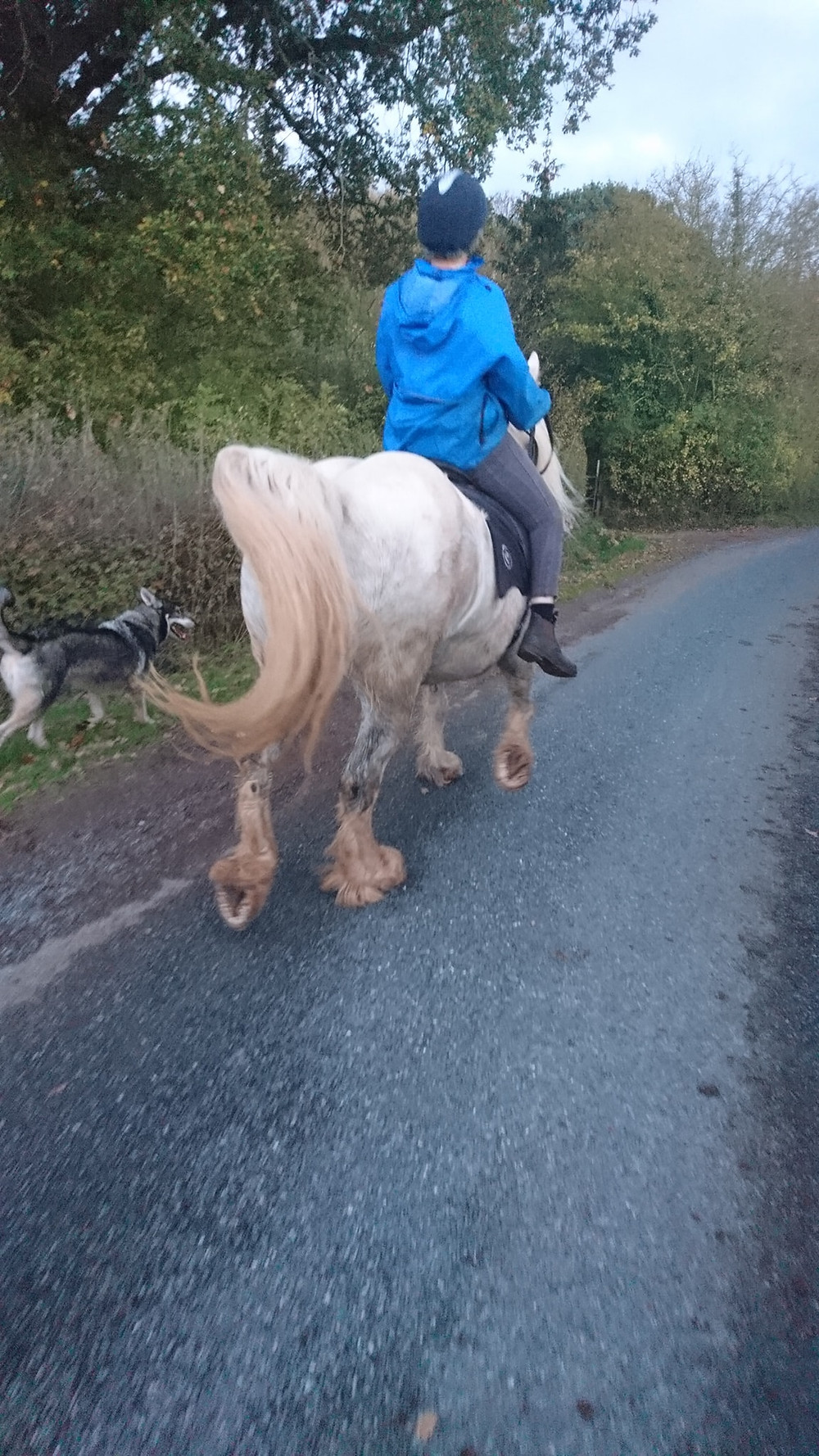horse and rider hacking at Pippsway Classical Natural Horsemanship Wellington Somerset near Devon