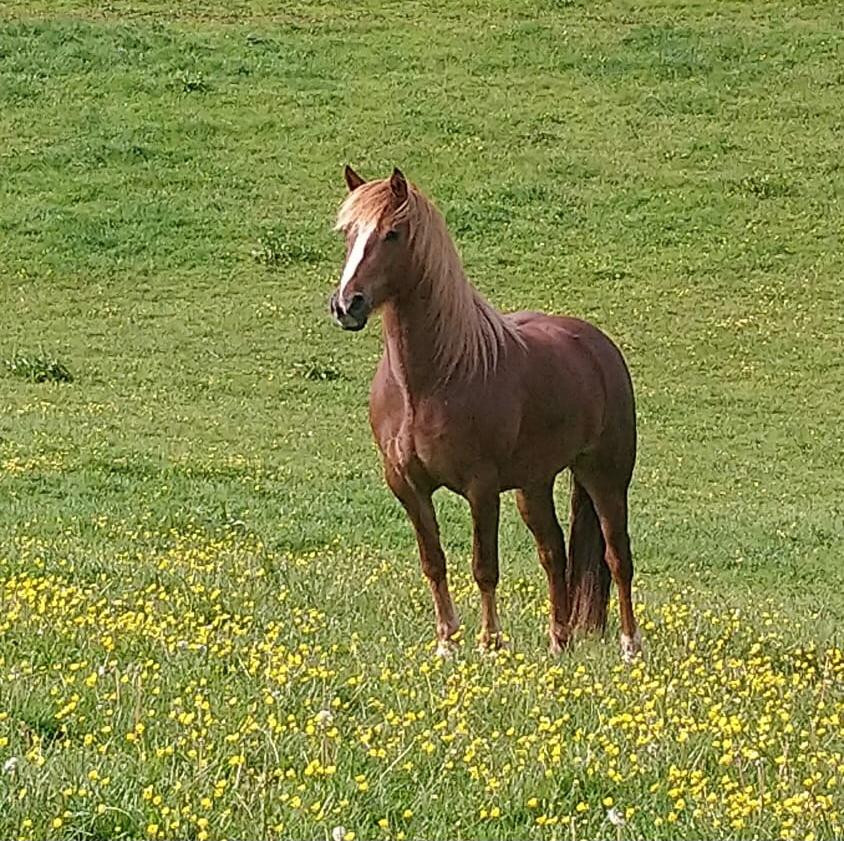 bay horse livery somerset