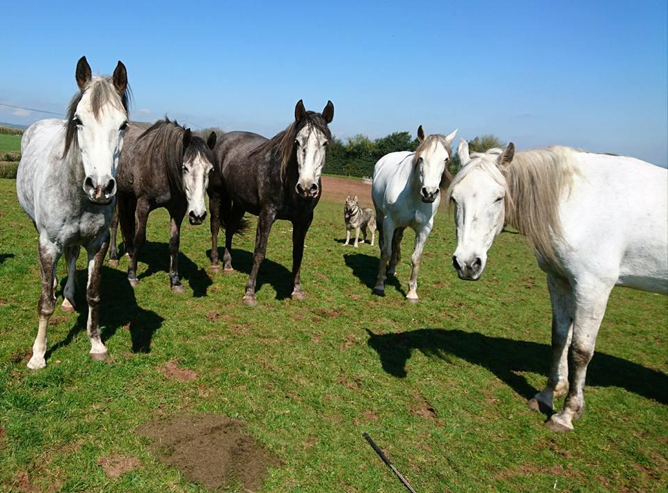Herd livery free range horses