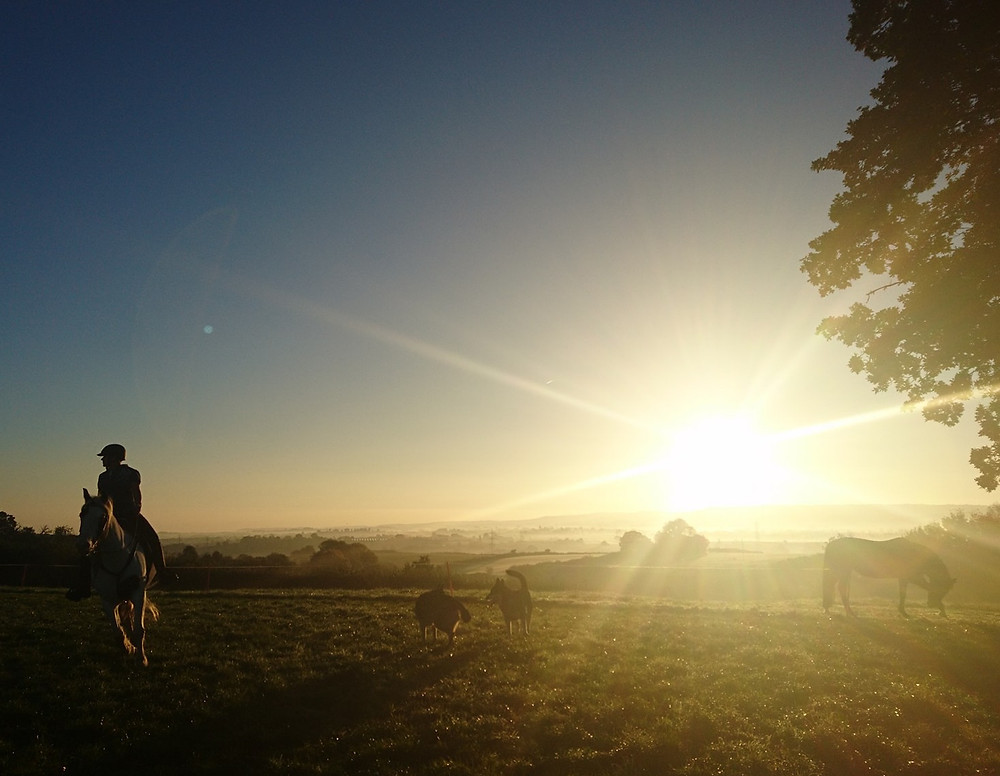 Horse and rider, two wolf dogs and grazing horse at sunrise, Pippsway of Classical Natural Horsemanship Wellington Somerset near Devon