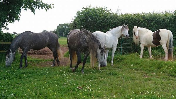 horses livery grazing free range Pippsway Wellington Somerset near Devon