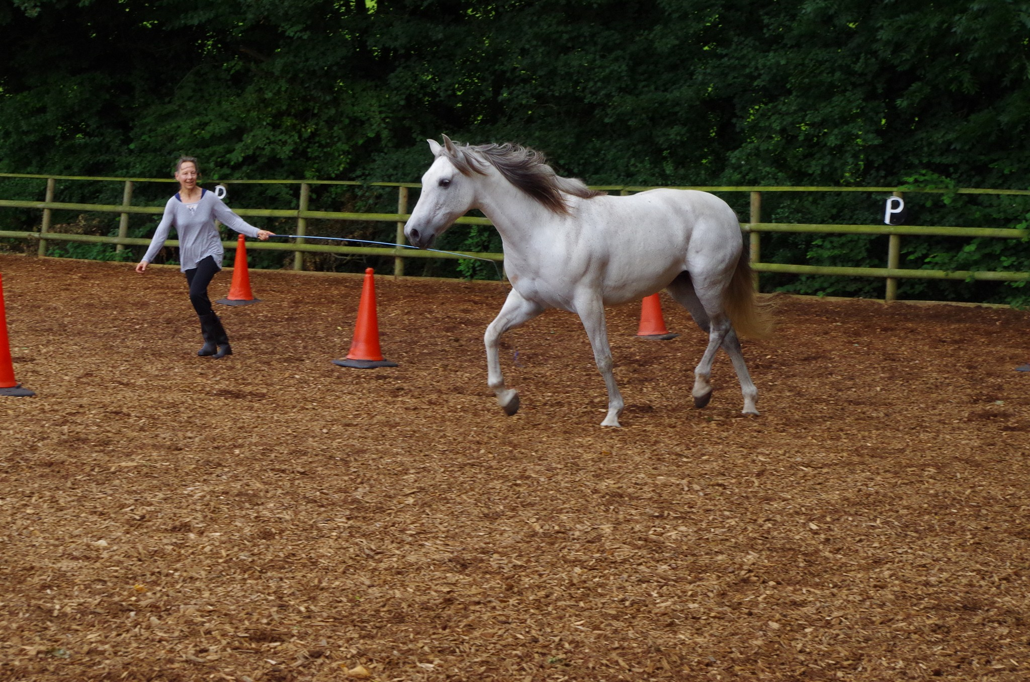 Freeschooling Natural horsemanship