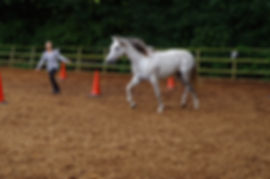 Pippsway Classical Natural Horsemanship learn to have affinity with your horse freeschooling training at horse connection clinic successful horsemanship