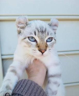 Icy Blue Snow Eyes