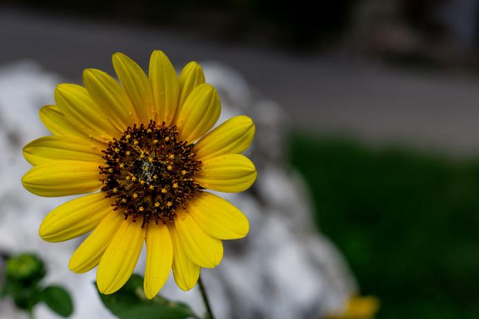 Flowers_8966.jpg